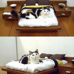 funny cat meme archives page 292 of 982 cat planet cat planet. Black Bedroom Furniture Sets. Home Design Ideas