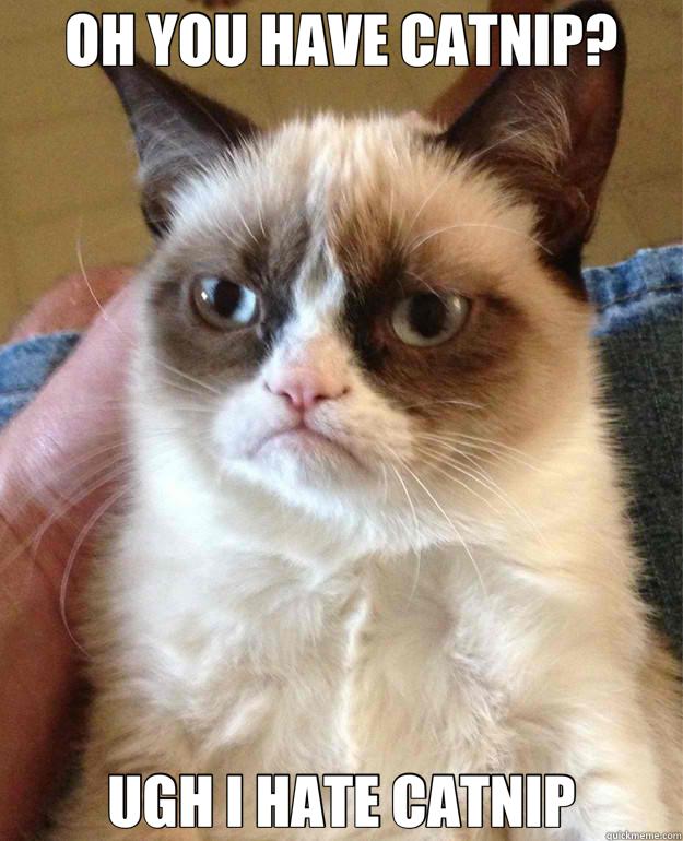 OH YOU HAVE CATNIP oh you have catnip? cat meme cat planet cat planet