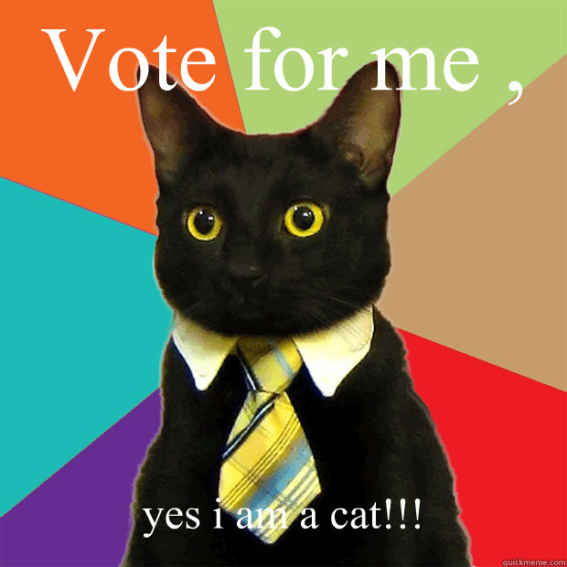 ERWANNE, A POIL ! Vote-for-me-yes-i-am-a-cat