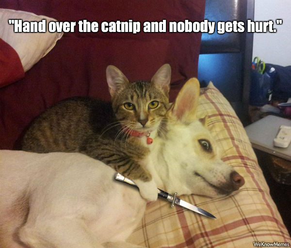 Hand over the catnip and nobody gets hurt hand over the catnip and nobody gets hurt cat meme cat planet