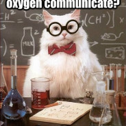 How Do Sulfur And Oxygen Communicate? Cat Meme