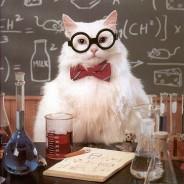 I Hate School Because Math Cat Meme