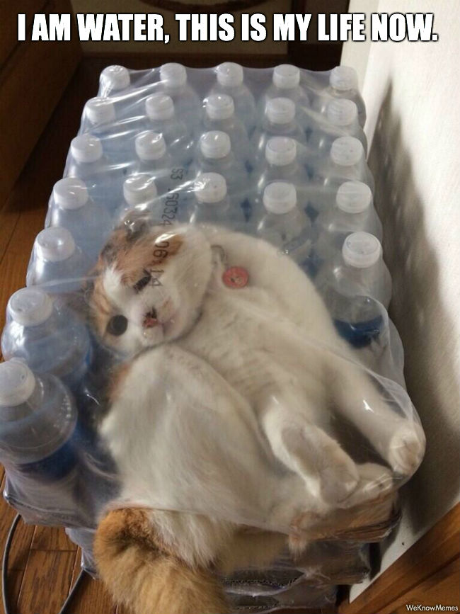 I am water i am water cat meme cat planet cat planet