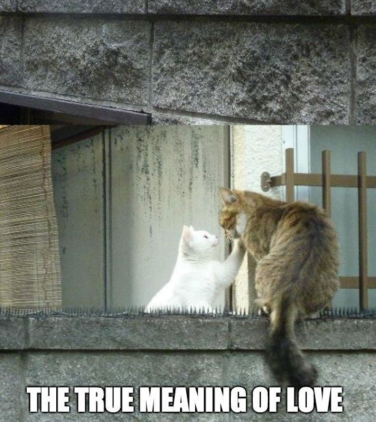 true meaning of love What is true love we've gone ahead and rounded up the best quotes that describe the romance and the rareness of finding true love.