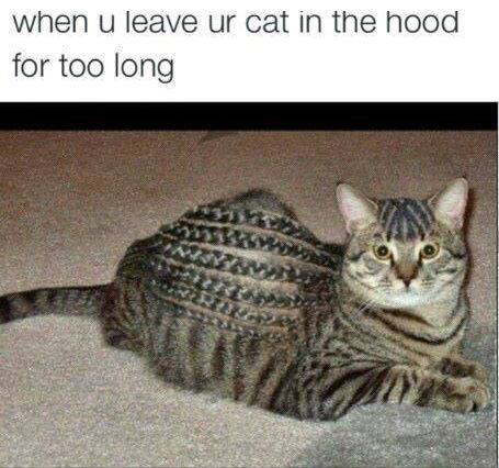 When You Leave Your Cat In The Hood when you leave your cat in the hood cat meme cat planet cat planet