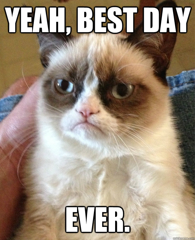 yeah best day ever. yeah, best day ever cat meme cat planet cat planet