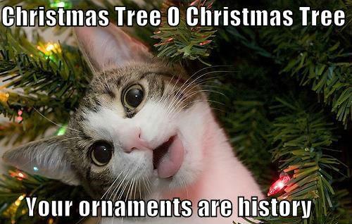 Christmas Tree O Christmas Tree Cat Meme