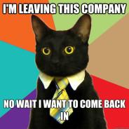 I'M Leaving This Company Cat Meme
