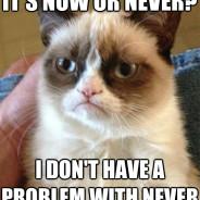 It's Now Or Never? Cat Meme