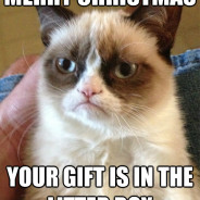 Merry Christmas Your Gift Cat Meme