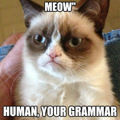 "Owner Says ""Meow Meow"" Cat Meme"
