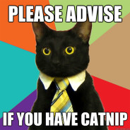 Please Advise If You Have Catnip Cat Meme