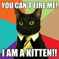 You Can't Fire Me! I Am A Kitten Cat Meme