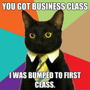 You Got Business Class Cat Meme