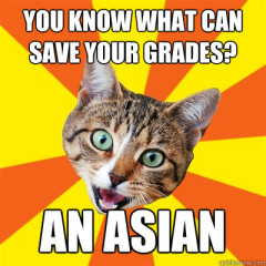 You Know What Can Save Your Grades? Cat Meme
