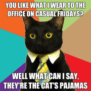 You Like What I Wear To The Office Cat Meme