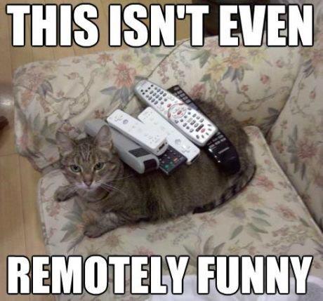 This Isnt Even Cat Meme