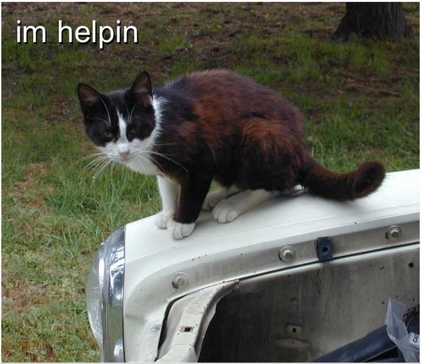 Image result for cat helping meme