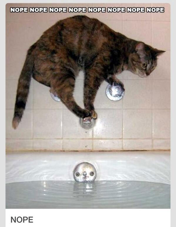 Nope Nope Nope Cat Meme - Cat Planet | Cat Planet